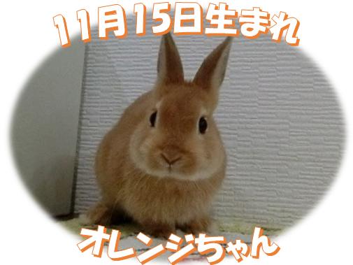11月15日生まれNDオレンジちゃん