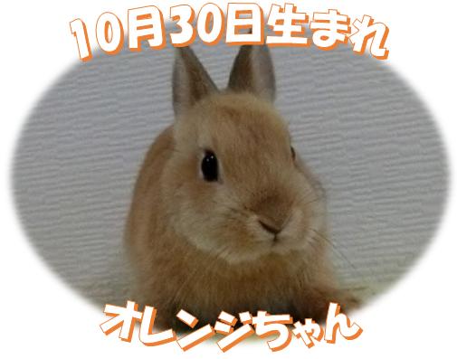 10月30日生まれNDオレンジちゃん