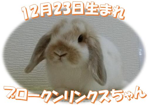 12月23日BKNリンクスちゃん