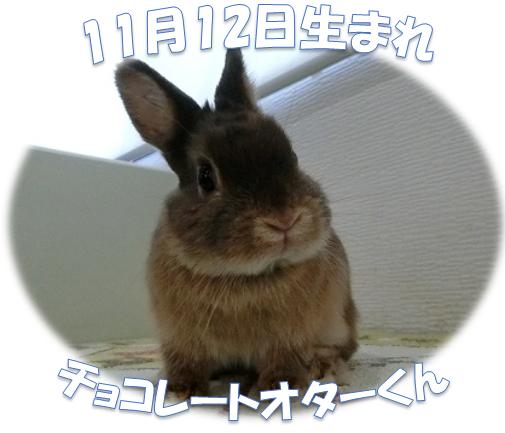 11月12日生まれNDチョコレートオターくん