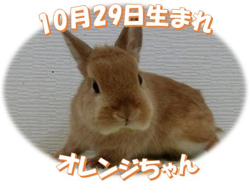 10月29日生まれNDオレンジちゃん
