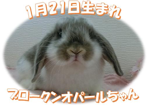 1月21日生まれBKNオパールちゃん