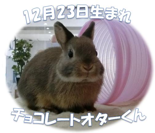 12月23日生まれチョコレートオターくん