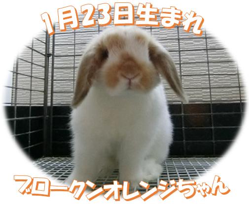 1月23日生まれBKNオレンジちゃん