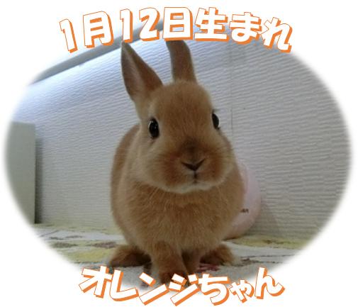 1月12日生まれNDオレンジちゃん