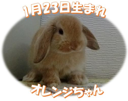 HLオレンジちゃん1月23日生まれ