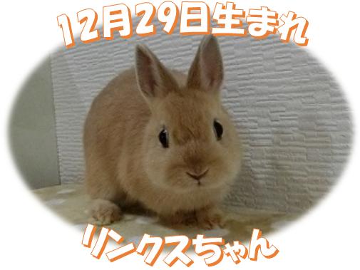12月29日生まれNDリンクスちゃん