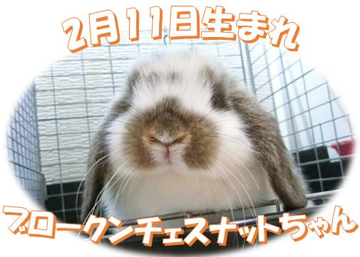 2月11日生まれBKNチェスナットちゃん