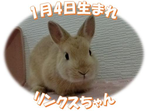 1月4日生まれNDオレンジちゃん