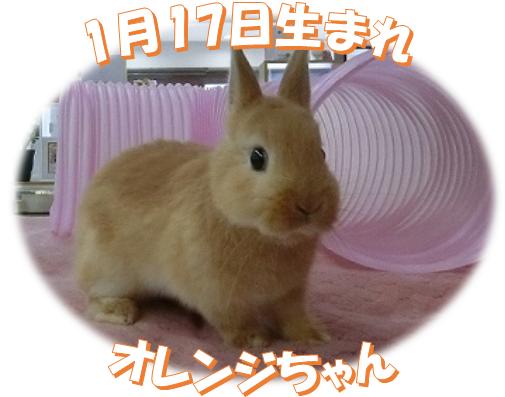 1月17日生まれNDオレンジちゃん