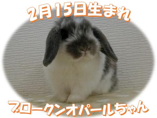 HL2月15日生まれブロークンオパールちゃん