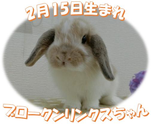 2月15日生まれブロークンリンクスちゃん