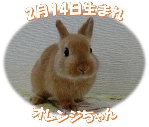 2月14日生まれNDオレンジちゃん