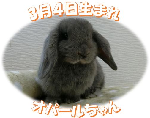 3月4日生まれHLオパールちゃん