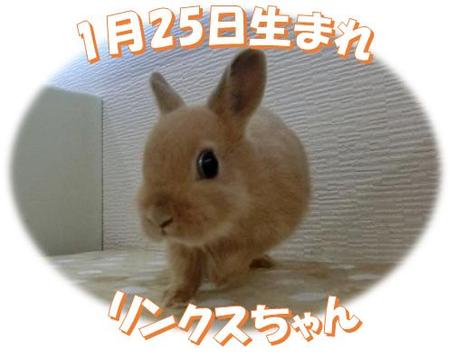 1月25日生まれNDリンクスちゃん