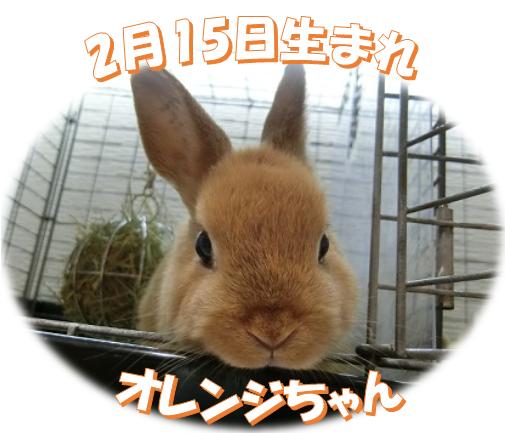 2月15日生まれNDオレンジちゃん