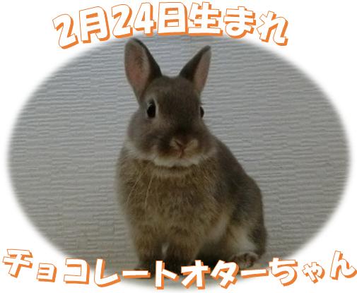 2月24日生まれNDチョコレートオターちゃん