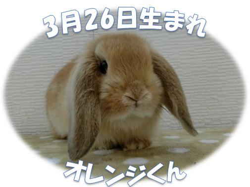 3月26日生まれHLおれんじくん