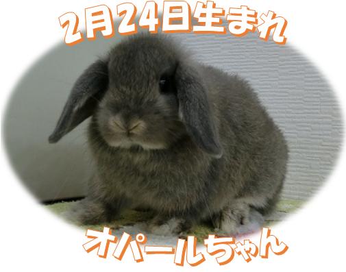 2月24日生まれHLオパールちゃん