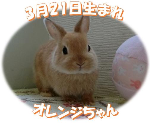 3月21日生まれNDおれんじちゃん