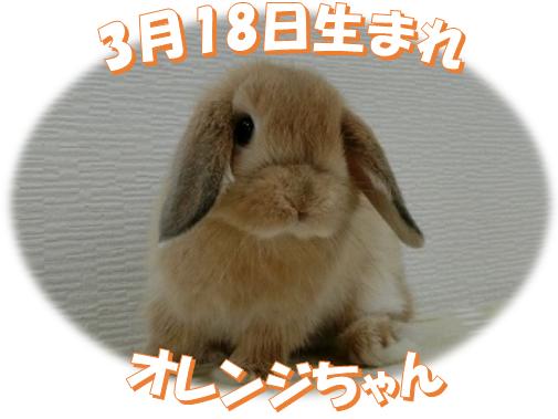 3月18日生まれHLオレンジちゃん