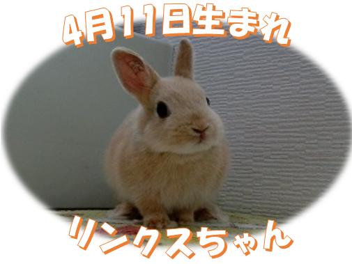 4月11日生まれNDリンクスちゃん