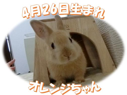 4月26日生まれオレンジNDオレンジちゃん