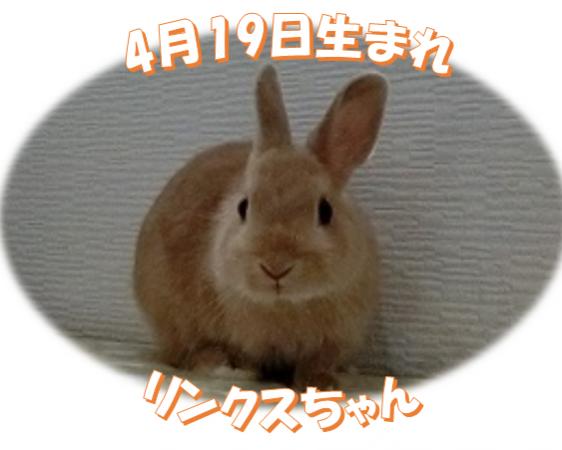 4月19日生まれNDリンクスちゃん