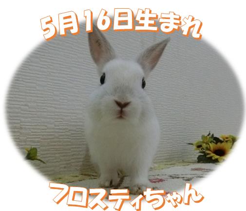 5月16日生まれNDフロスティちゃん
