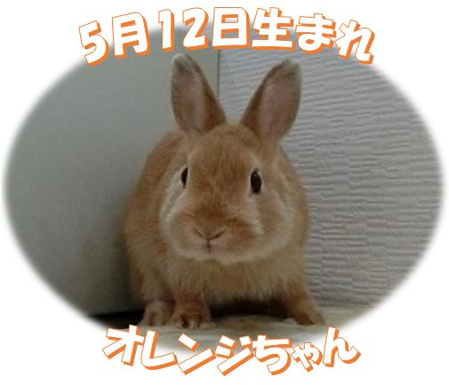 5月12日生まれNDオレンジちゃん