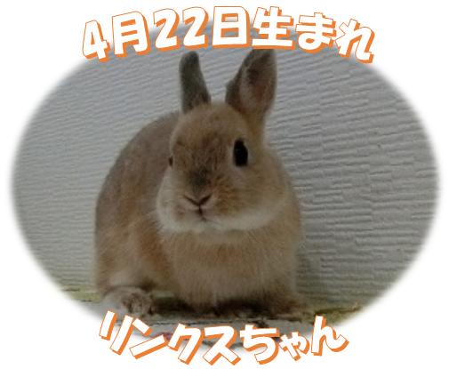 4月22日生まれNDリンクスちゃん