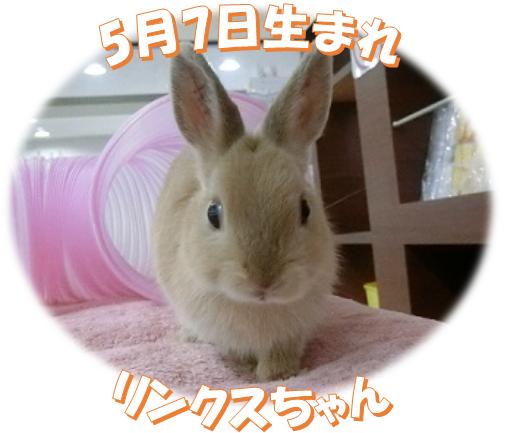 5月7日生まれNDリンクスちゃん