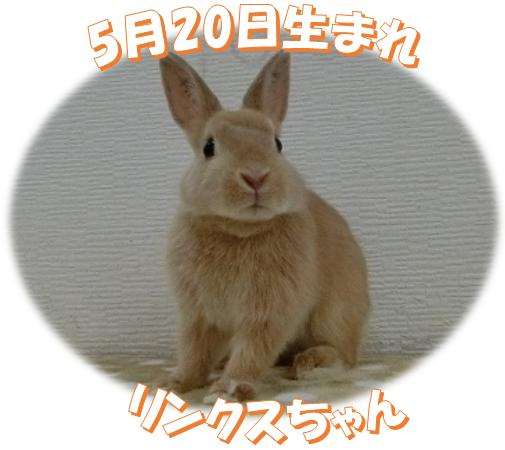 5月20日生まれリンクスちゃん