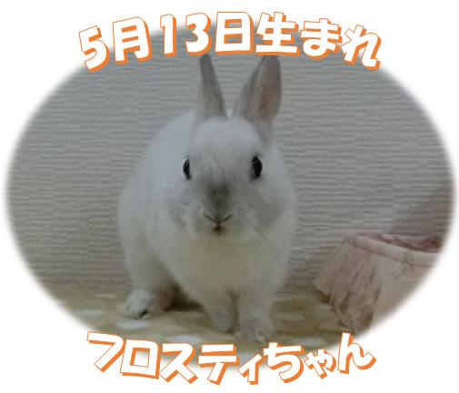 5月b13日生まれNDフロスティちゃん