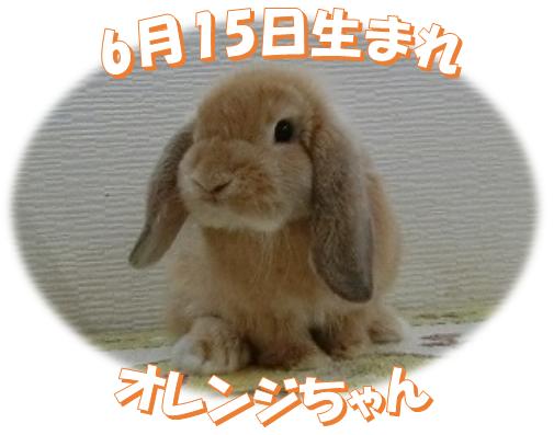 6月15日生まれオレンジちゃん