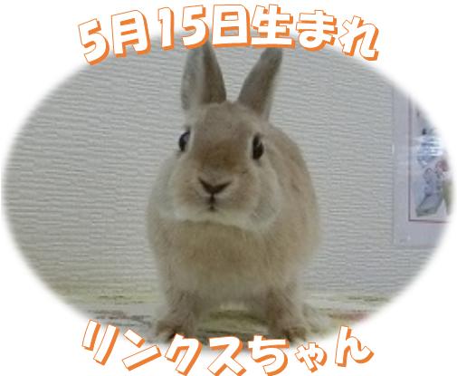 5月15日生まれNDリンクスちゃん