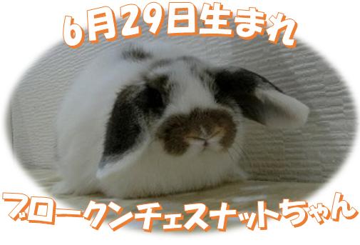 6月29日生まれBKNチェスナットちゃん