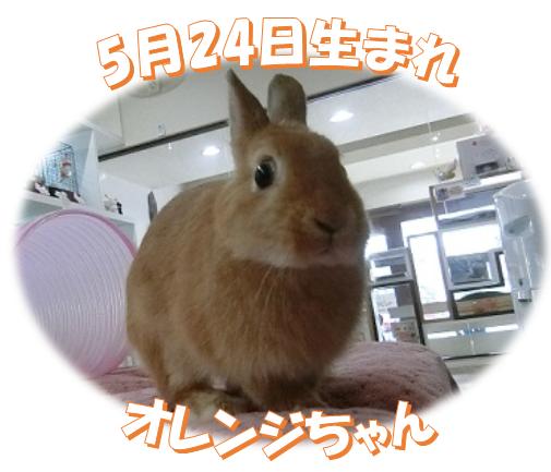 5月24日生まれNDオレンジちゃん