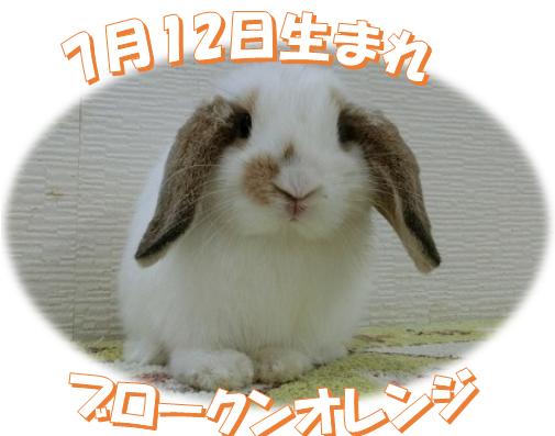 7月12日生まれHLBKNオレンジちゃん
