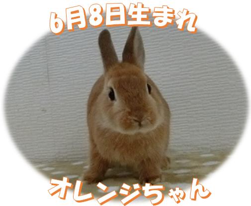 6月8日生まれNDオレンジちゃん