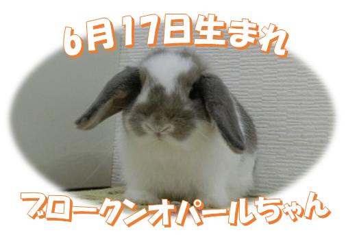 6月17日生まれBKNオパールちゃん