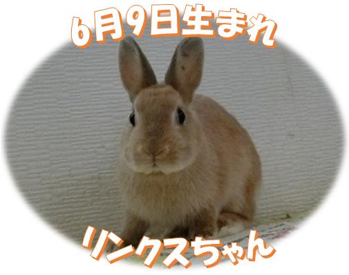 6月9日生まれNDリンクスちゃん