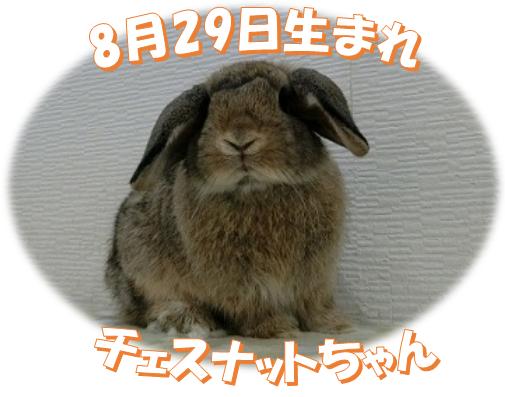 8月29日生まれHLチェスナットちゃん