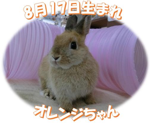 8月17日生まれNDオレンジちゃん