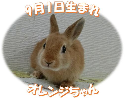 9月1日生まれNDオレンジちゃん