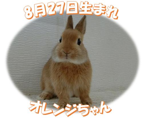 8月27日生まれNDオレンジちゃん