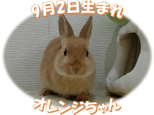 9月2日生まれNDオレンジちゃん