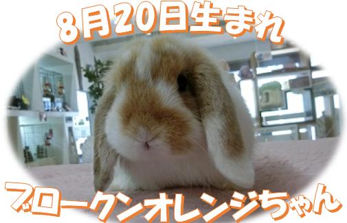 8月20日生まれブロークンオレンジちゃん