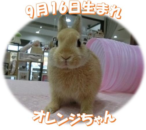 9月16日生まれNDオレンジちゃん