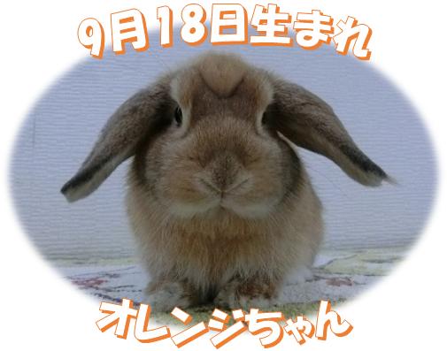 9月18日生まれHLオレンジちゃん